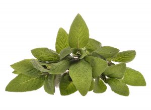 Sage Essential Oil Uses and Benefits (Spanish)
