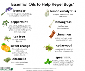 Essential Oils That Repel Insects