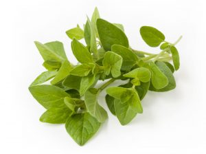 Oregano Essential Oil Uses and Benefits