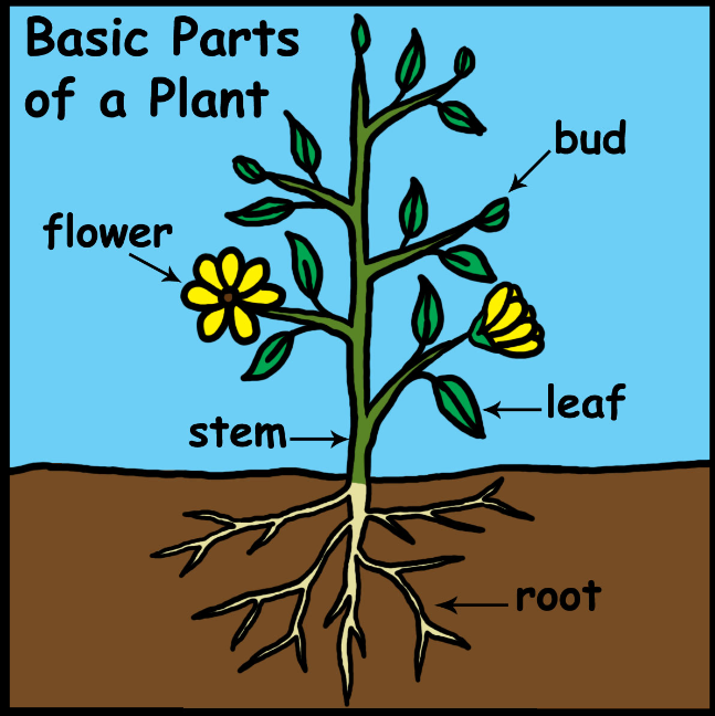 Plant Parts Determine the Purpose of an Essential Oil